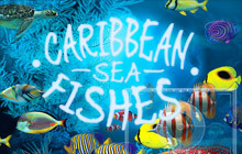 Caribbean Sea Fishes Badge