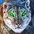 Fierce Tales: Feline Sight Collector's Edition Icon