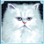 IGT Slots Kitty Glitter Icon
