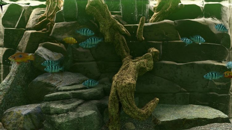 Biotope Aquarium Simulator Screenshot 1